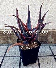 FARMERLY Samen Paket: 120 Stück Aloe Vera