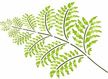 Farn Schablone-wiederverwendbar Große Pflanze