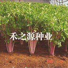 Fash Lady Garten Gemüsesamen, Sellerie Samen