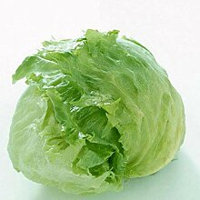 Fash Lady Gemüsesamen, Blattsalate mit