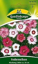 Federnelke Mischung von Quedlinburger Saatgut [MHD