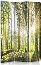 Feeby Frames. Raumteiler, Gedruckten auf Canvas, Leinwand Wandschirme, dekorative Trennwand, Paravent einseitig, 3 teilig (110x180 cm), WALD, BAUM, SONNE, NATUR, LANDSCHAFT, GRÜN