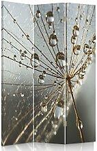 Feeby Frames. Raumteiler, Gedruckten auf Canvas, Leinwand Wandschirme, dekorative Trennwand, Paravent einseitig, 3 teilig (110x150 cm), PFLANZE, LÖWENZAHN, NATUR, WASSER, WASSERTROPFEN