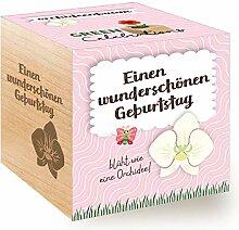 Feel Green Celebrations Ecocube, Orchideenbaum,