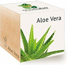 Feel Green Ecocube Aloe Vera, Nachhaltige