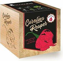 Feel Green Ecocube Chili Carolina Reaper,
