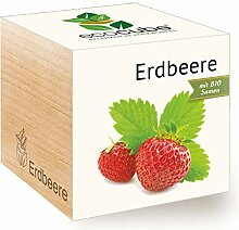 Feel Green Ecocube Erdbeere, Bio Samen,