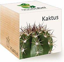 Feel Green Ecocube Kaktus, Nachhaltige