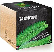 Feel Green Ecocube Mimose, Blätter Schließen