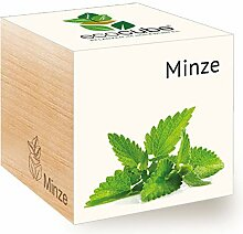 Feel Green Ecocube Minze, Nachhaltige Geschenkidee