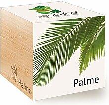 Feel Green Ecocube Palme, Nachhaltige Geschenkidee