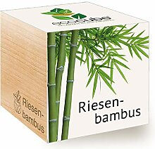 Feel Green Ecocube Riesenbambus, Nachhaltige