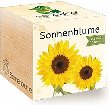 Feel Green Ecocube Sonnenblume, Bio Zertifiziert,