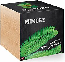 Feel Green Feel Green EcoCube Mimose, Pflanze mit