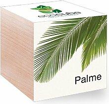 Feel Green Feel Green EcoCube Palme, Pflanze mit