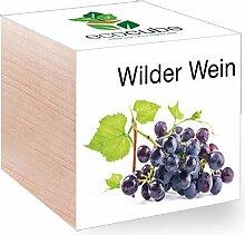 Feel Green Feel Green EcoCube Wilder Wein, Pflanze