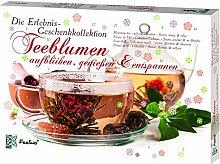 Feelino Teeblumen Geschenk-Kollektion,
