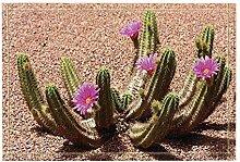 FEIYANG Pflanzendekoration Wüstenkaktusblüte Bad