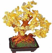 Feng Shui Glücksbaum 25 cm Geldbaum Bonsai