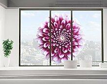 Fensterbild Aster Natur Blumen Blüten Herbst