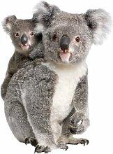 Fenstersticker No.336 Koalabären tier koala bär beuteltier Fenstersticker Fensterfolie Fenstertattoo Fensterbild Fenster-Deko Fensteraufkleber Fensterdekoration Glas-Sticker Größe: 81cm x 60cm