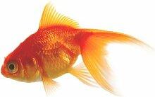 Fenstersticker No.479 Goldfisch Fisch Wasser Tier