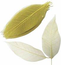 Fenteer 100pcs Natürliches Magnolienblatt Skelett