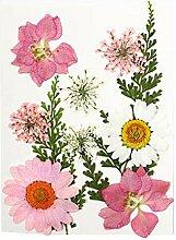 Fenteer 13 Stück Getrocknete Blumen Verzierungen