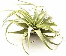 FERRY Bio-Saatgut Nicht nur Pflanzen: 3X