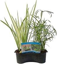 Fertigmischkörbchen oval - Teichpflanze im