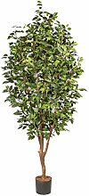Ficus Benjamini, ca 210cm, grün Naturstamm,