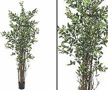 Ficus Benjamini, deluxe, mit Topf, 1386 Blätter,