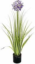 Flair Flower Allium-Gras-Busch im Topf,