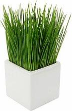 Flair Flower Gras i.Topf Kunststoff, Keramik,