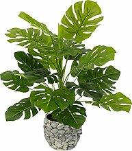 Flair Flower Topf Zimmerpflanze Splitphilopflanze