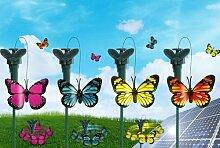 Flatternder Solar Schmetterling
