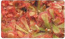 Fleischfressende Pflanze Rosa Plant Wallpaper