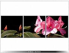Fleur Azalée - TABLEAU IMPRIME MODERNE - DECORATION - DESIGN -