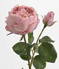 Fleurs Lou de Castellane Englische Rose H53 RS