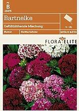Flora Elite 23475 Bartnelke Gefülltblühende