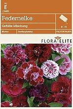 Flora Elite 23485 Federnelke Gefüllte Mischung