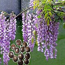 Floral Seeds, 50Pcs/Bag Floral Seeds schön