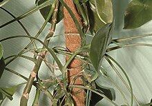 Floraworld 010986 Moos-Pflanzstab Classic 80 cm