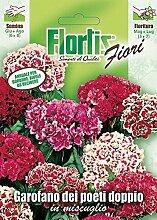 Flortis 4351065 Bartnelke Mischung