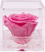 Flowercube Rosa Stabilisiert Duftkerze 8x 8Farbe Pink Geschenkidee