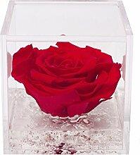 Flowercube Rosa Stabilisiert Duftkerze 8x 8Farbe Rot Geschenkidee