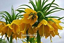 Förderung! 10 PC / Beutel-Gelb Kaiserkrone Seeds
