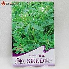 Förderung 100pcs 100% echte Seltene Agave Samen, Pflanze Baumsamen Kräuter Blumensamen Sukkulente Novel Seed