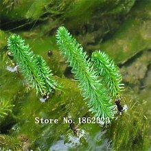 Förderung heißer verkaufen100pcs Aquarium Grassamen (mix) Wasser Wasserpflanzensamen (15 Arten) Familie pflegeleichte Pflanze gra