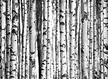 Forests Birkenwald Foto-Tapete - Größe 315x232 cm